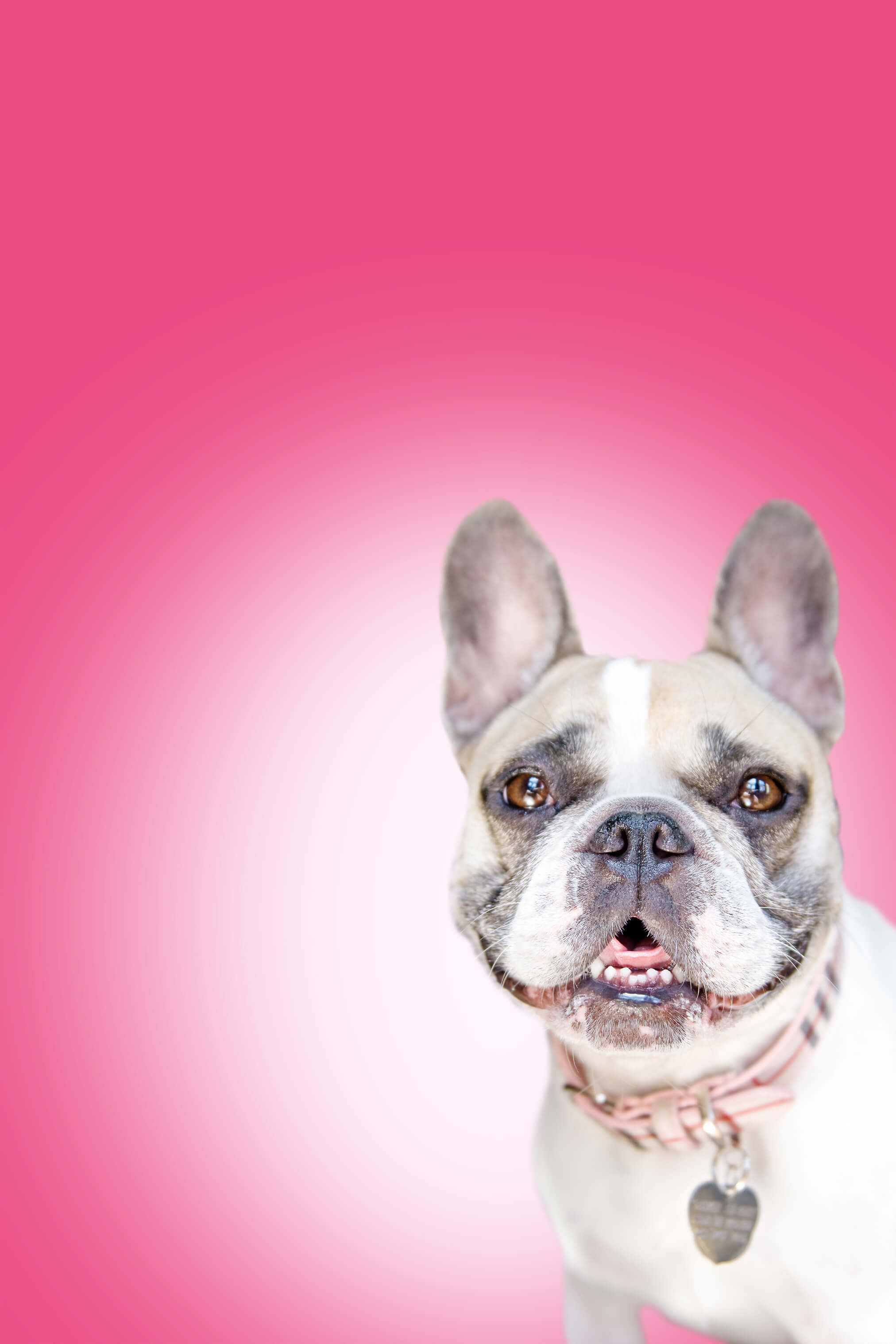 Stock Pet Photography Color