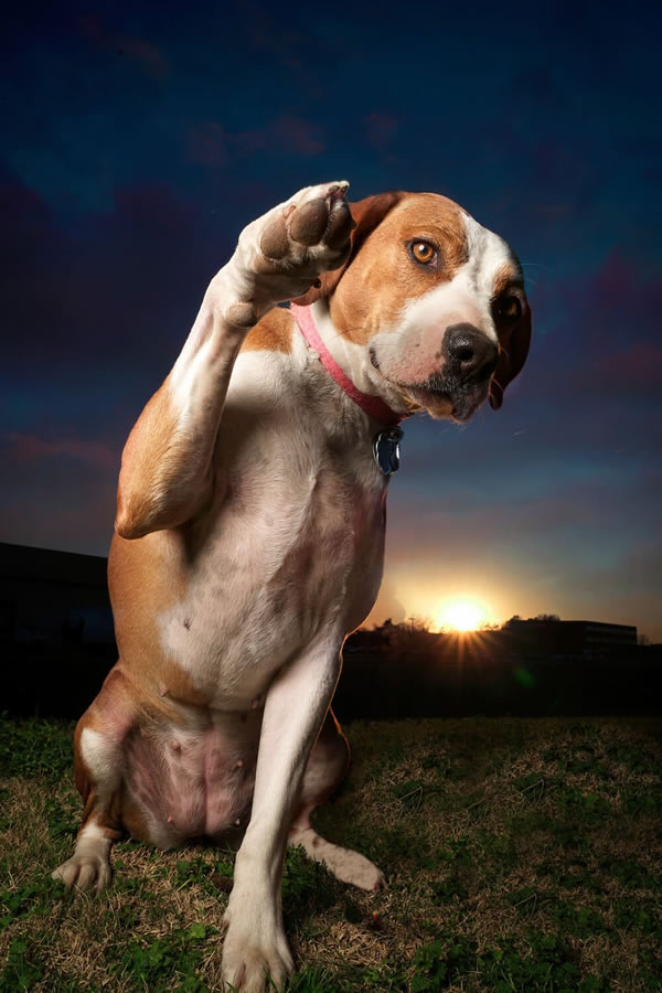 Stock Pet Photography Body Language