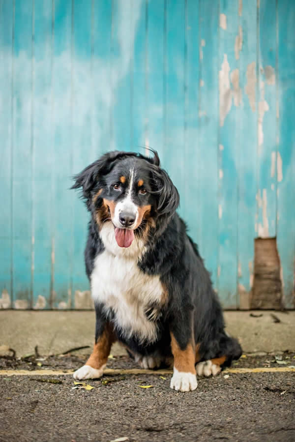 Stock Pet Photography Dog Breeds
