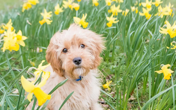 Stock Pet Photography Seasonal Spring
